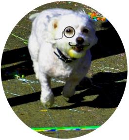 Stache Puppy